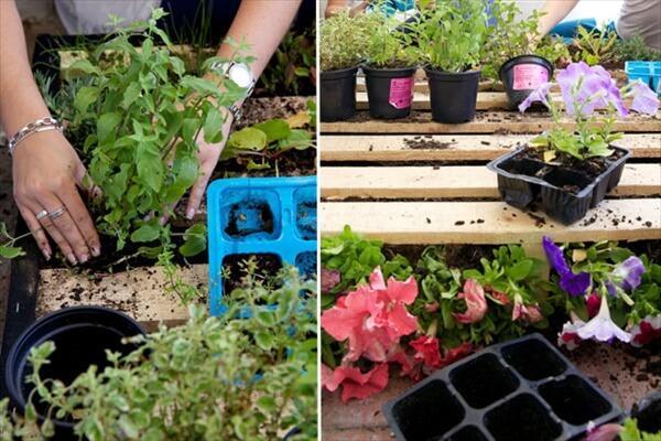 pallet-vertical-garden (2)