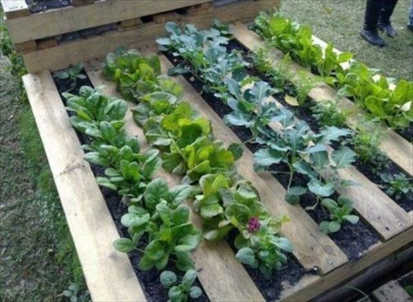 Natural and Refreshing Pallet Garden Ideas – 101 Pallets