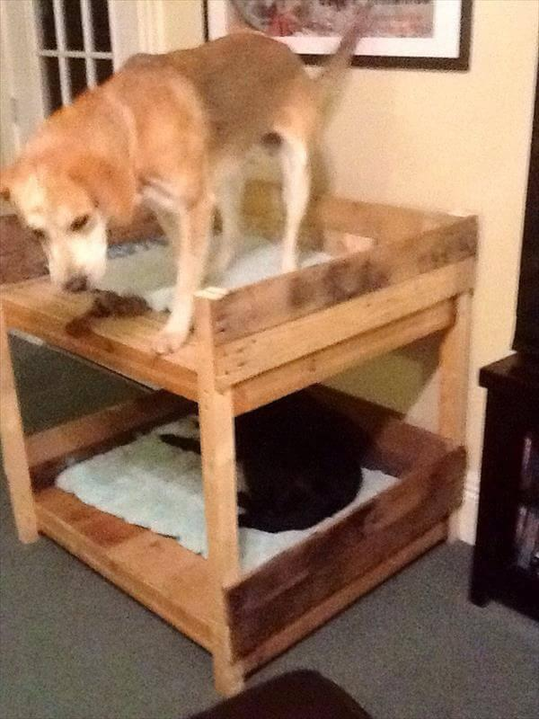 reclaimed pallet bunk pet bed