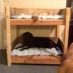 diy bunk pallet bed idea