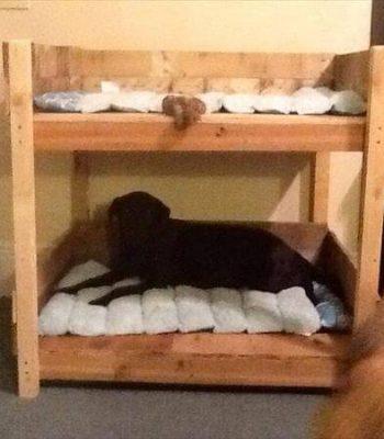 diy bunk pallet bed idea