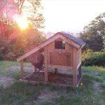 recycled pallet rustic chicken tractor