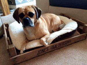Cute Pallet Dog Bed