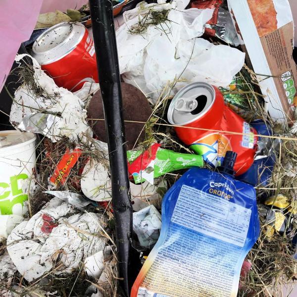 Dispose of Garbage Regularly