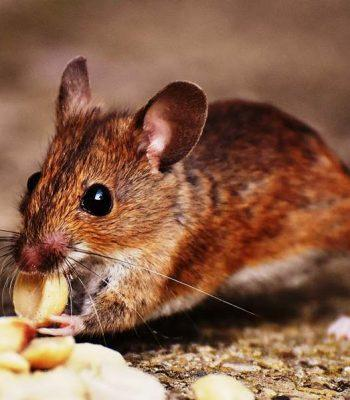 Pest Control and Prevention Tips from the Pros