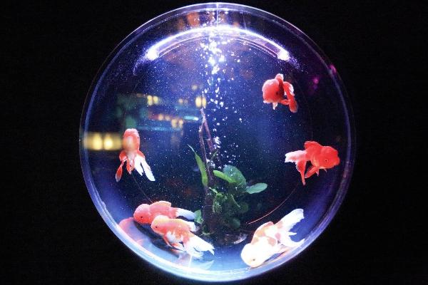 Care And Maintenance Tips To Keep Your Fish Tank Working The Right Way