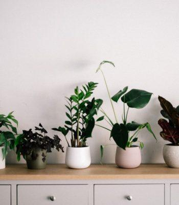 The Major Health Benefits Of Having Indoor Plants Why It's Important